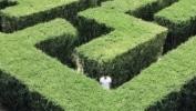 RGPD : huit mythes à déconstruire