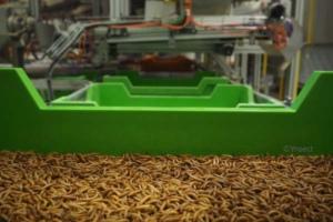 Convoyeur de bacs d'insectes utilisé par Ÿnsect dans ses fermes.