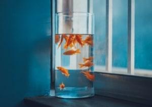 À titre de comparaison, un poisson rouge peut se concentrer pendant 9 secondes.