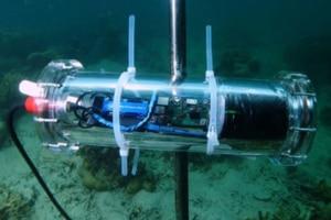 CORaiL, le projet d'IA au chevet des récifs coralliens