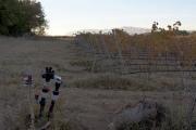 La smart irrigation est l'un des principaux domaines d'application de l'IoT dans l'agriculture. ©Sensing Labs