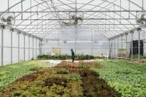 Avec ce nouveau projet de ferme urbaine à Bordeaux, Les Nouvelles Fermes pourra embaucher jusqu'à 17 personnes supplémentaires.